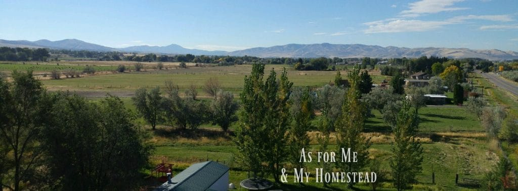 homesteadfbcover