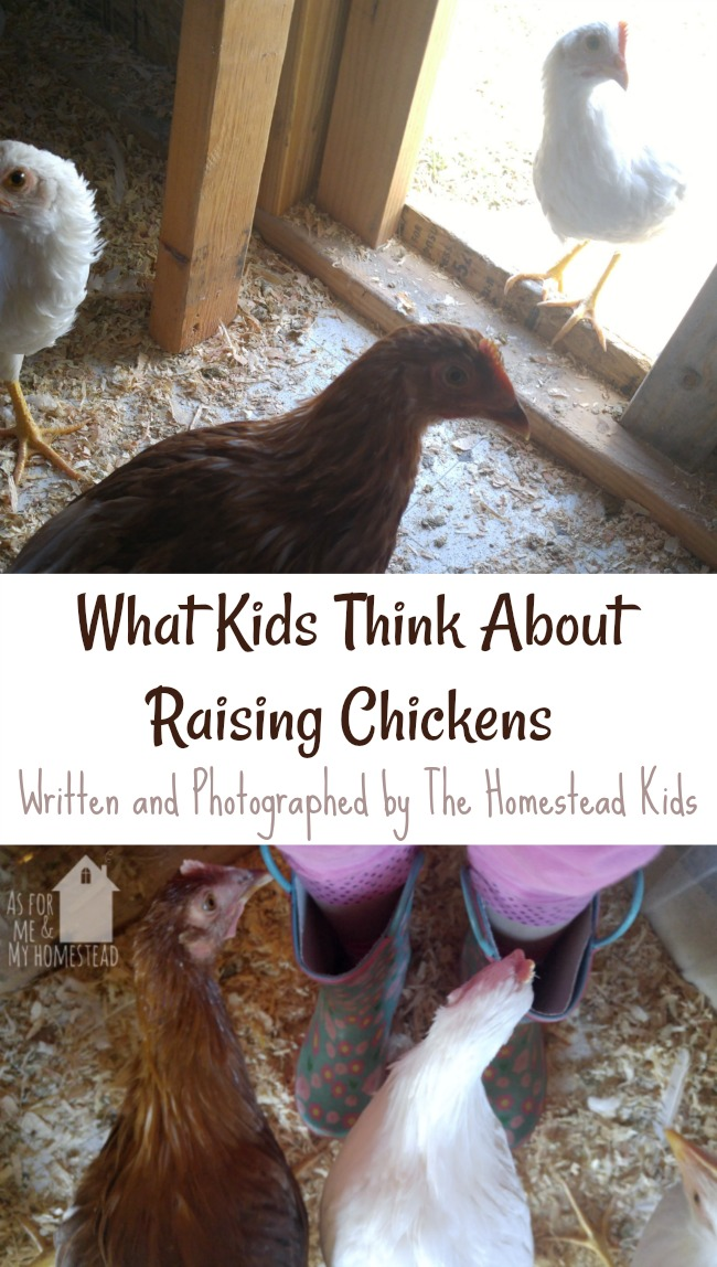 What Kids Think About Raising Chickens- written by kids, for kids