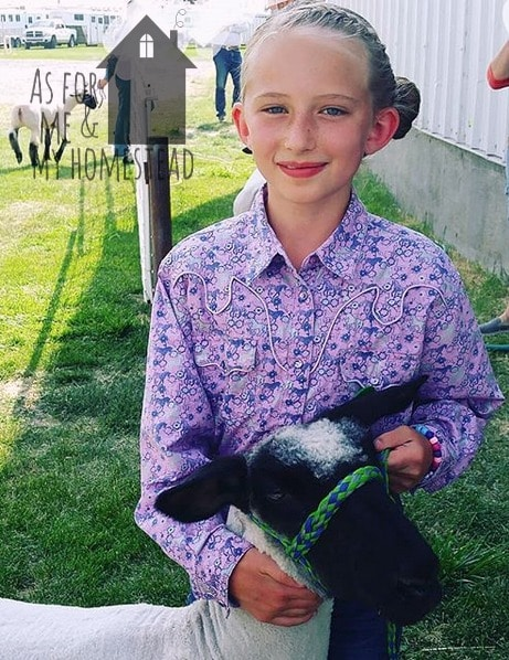 Our experiences this August, including 4-H and a county fair, market lambs, chickens, a birthday, baptisms, and getting a new puppy!