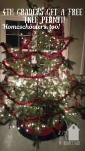 Free: Christmas Tree Permits for 4th Graders