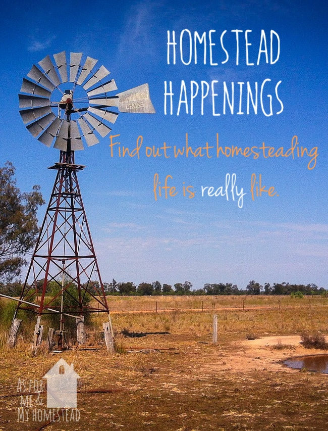 New feature: Homestead Happenings, so you can get a feel for what homesteading is like in real life.