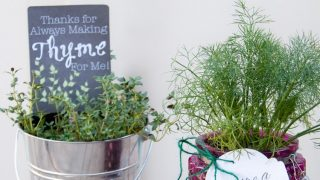 Potted Herb DIY Gifts with Printable Tags