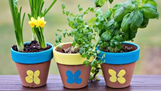 Decorative Thumbprint Flower Pots for Mother's Day