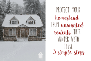 Protect Your Homestead From Unwanted Rodents This Winter