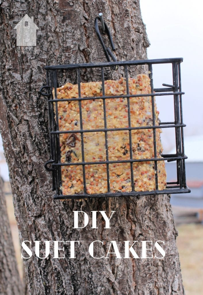 DIY Suet Cakes in a suet cake holder, hanging on a tree